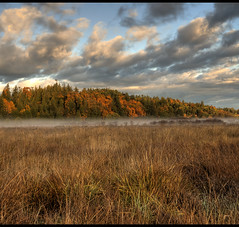 Fall Colors in a Autumn Landscape (Brandon Godfrey) Tags: world pictures morning autumn trees sky mist canada fall nature colors beautiful grass misty fog clouds season landscape photography dawn amazing scenery colours seasons photos pics earth britishcolumbia wheat sony horizon foggy scenic pic scene canadian vancouverisland creativecommons western pacificnorthwest northamerica series hay wilderness alpha dslr hdr feild a300 photomatix saanichton gamewinner tonemapped tonemapping abigfave thechallengegame challengegamewinner sonya300 pregamewinner