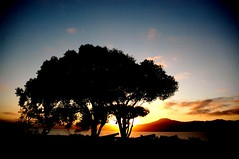 in between dreams (GraceOda) Tags: floripa sunset pordosol tree sc backlight contraluz jurere santacatarina arvore fortalezadesojosdapontagrossa florianolpolis