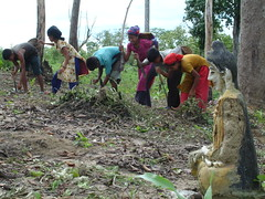 local women planting seeds (fish030) Tags: food fish mountains work children construction village muslim aid disaster bangladesh crisis floods humanitarian distribution ngo logistics buddhists hilltracks ratplague catostrophe indeiginous