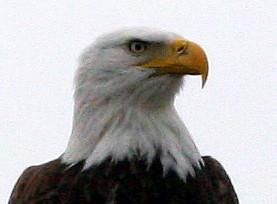 Eagle Head 20091117