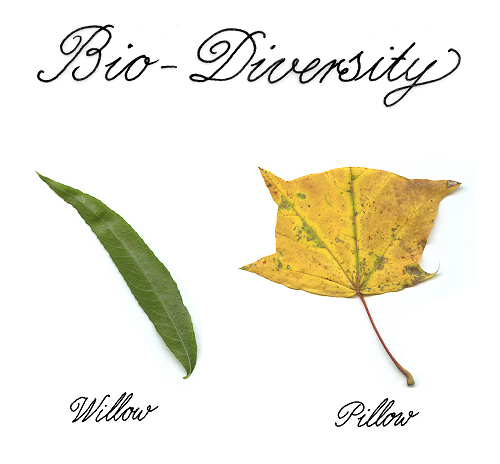 Bio-Diversity via New York Times