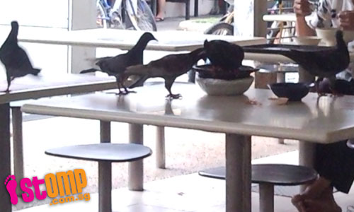 Birds feast on leftovers at hawker centre