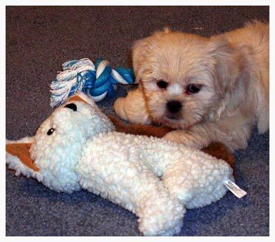 Dory-1st-Stuffie