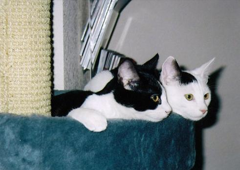 As young cats