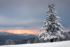 Christmas Time (andywon) Tags: christmas winter light sunset sky sun snow mountains nature clouds germany landscape deutschland christmastree hills fir spruce schwarzwald blackforest badenwrttemberg kandel explored gettyimagesgermanyq1