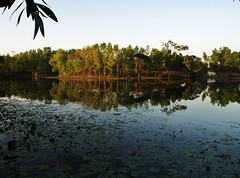 Madhubpur Lake, Srimongal, Bangladesh (shaun shooter) Tags: nature landscapes country views bangladesh srimongal madhubpurlake