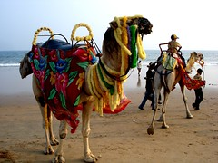 ~Like 2 have a ride...........?.. (rabidash*) Tags: india colour art love beautiful beauty photography amazing cool fantastic flickr shot good awesome great explore creation dash excellent click colourful lovely orissa rabi puri rabindra rabidash excxellent rkdash rabidashphotography