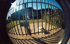 Habíaunperrotrasunareja. (Romina O. | romigraphy.com) Tags: pictures color lomo lomografía fisheye sur analogue angular angulo ojodepez c41 analogo