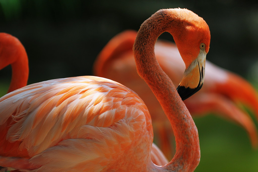 Curvy Flamingo by ralph and jenny, on Flickr
