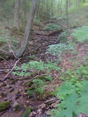 22 - Cane Creek