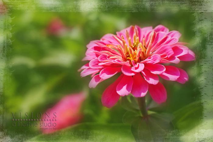 Flowerswmblog