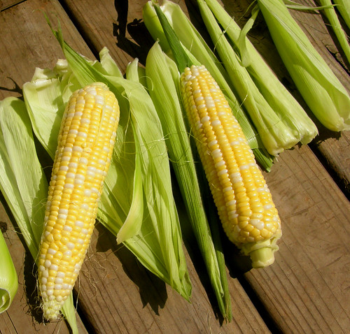 corn & husks