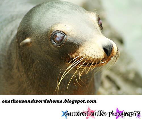 cute overload seal 2