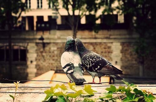 lovebirdss