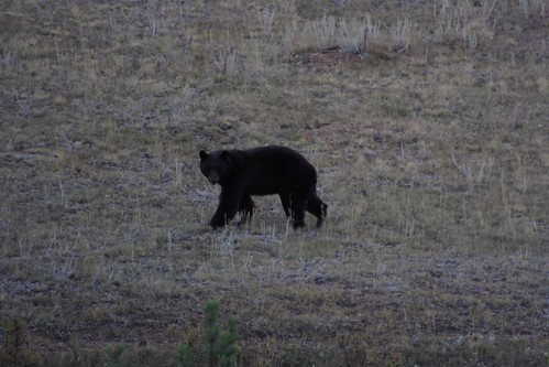 Bear in Estes Park by you.