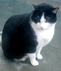 M A I K Y (BER. SANTIAGO.) Tags: catnipaddicts