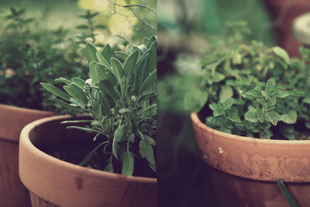 Sage and Oregano