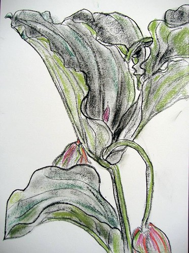 Day194,Plant,carbon block/pastel,A3.