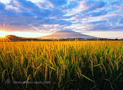 Just Before the Harvest. (Hirosaki Japan).  Glenn Waters. 4,700 visits to this photo. Thank you. (Glenn Waters in Japan.) Tags: autumn light sunset sky sun mountain fall nature field yellow japan clouds rural gold volcano nikon rice paddy dusk farm harvest dramatic vivid explore aomori vista f22 24mm hirosaki sunrays  japon flair iso1600   sunflair     explored  d700  glennwaters nikkor2470mmf28gedafs travelsofhomerodyssey