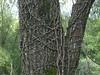 l'albero e la rete