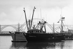 harbor, Newport Oregon ('Carmen') Tags: bridge mist beach water fog oregon boats harbor waves newport seals oregoncoast fishingboats newportoregon