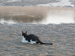 P1080172 (shimmertje) Tags: sea bird beach hail cat grey al walk african parrot tuxedo congo kc domino oman muscat shanlung walkies cag dommie riamfada