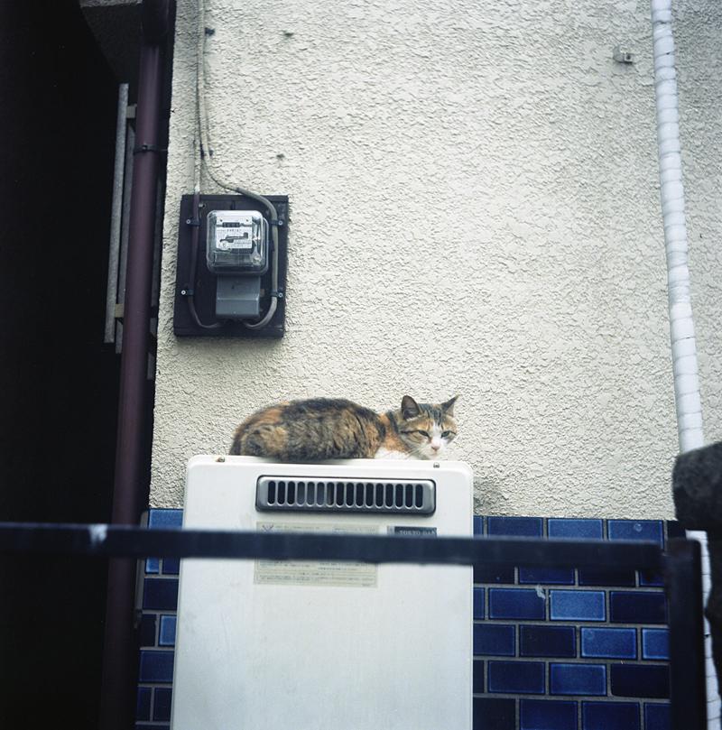 湯沸かし器猫