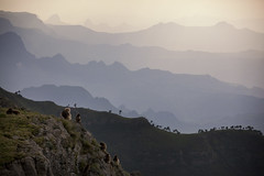 Living on the Edge (Hulivili) Tags: park sunset mountains landscape wildlife national baboons primates gelada simien ethiopiaafricatravelseptember2009