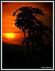 ` Let the light shine through ` (huda mamat) Tags: sunset sky sun tree silhouette golden nikon malaysia framing portuguesesettlement portugis langit matahari pokok perkampungan matahariterbenam ujongpasir mlacca hudamamat