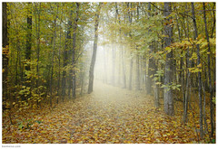 Forest Spirit (Ben Heine) Tags: morning autumn trees light wallpaper mist canada cold art fall leaves silhouette misty fog composition forest season print poster photography dawn bomen nikon dof quebec pov earth path lumire air perspective atmosphere kingdom fresh oxygen environment conceptual breathe copyrights refreshing brouillard mothernature emptiness chemin fort lighteffects feuilles brume sfumato indiansummer ecosystem saison d70nikon rose autumne montsainthilaire forestspirit benheine tindien ore flickrunited huzay infotheartisterycom