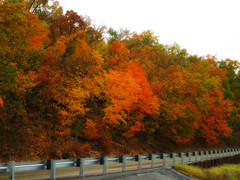 Just before they get naked! (dart5150) Tags: road trees fall leaves woods ok keatonvillehill