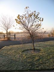IMG_4791 (Jill Lee Jones) Tags: frost views montague