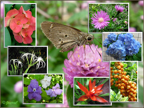 Collage of colourful flowers and butterfly captured in our tropical garden,