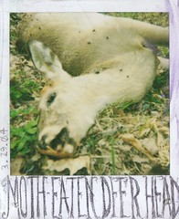 moth-eaten deer head
