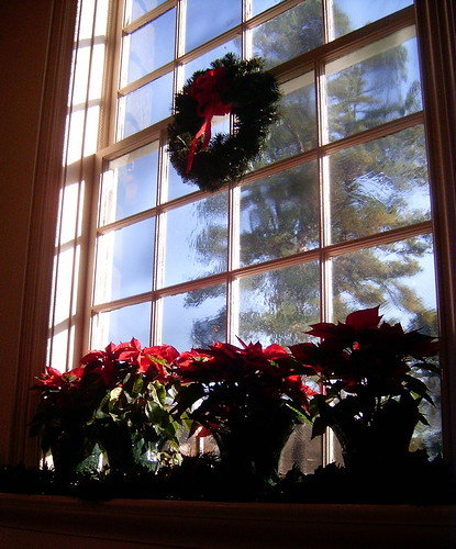 Poinsettia Window 2009
