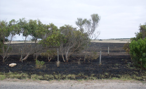 Paddock burnt