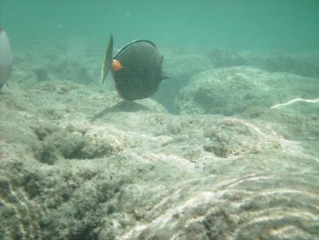 snorkeling12