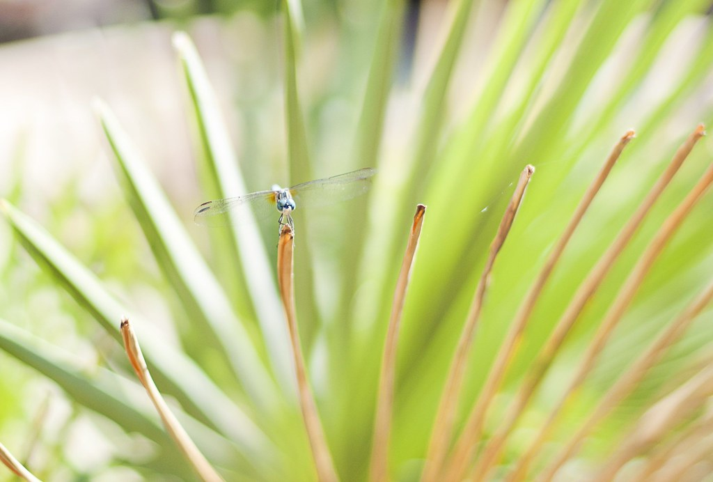 dragonfly summer, 2011