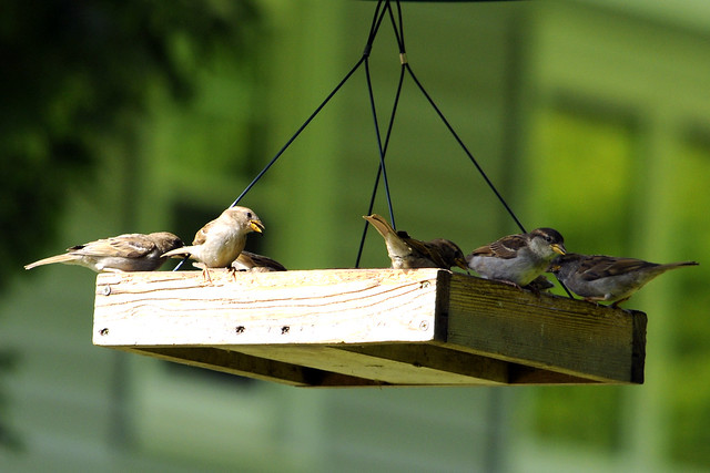 too many sparrows two