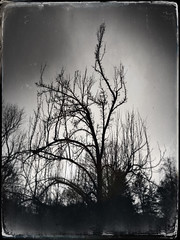 Levitate (Creepella Gruesome) Tags: iphone6splus hipstamatic nature winter tree branches silhouette blackandwhite spooky mysterious phantasm