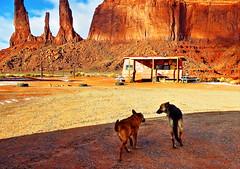 Two Dogs (pajafar) Tags: dogs navajotribalpark sandstoneredrocks monumentvalley