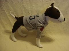 english bull terrier 1