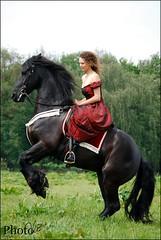 28390647 (amable) Tags: horse model fries friesian prance steigeren jauke vrijheidsdressuur