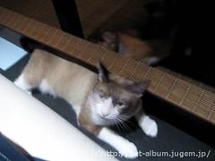 猫カフェのネコの写真7