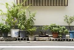 Tsukishima summer 06