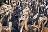 I miei amici degli stagni. (Roberto Click) Tags: life sardegna nature fauna nikon sardinia natura saline animali cagliari fenicotteri stagno zoneumide naturaincontaminata nikond80 nginationalgeographicbyitalianpeople artedellafoto floraefaunadellasardegna updatecollection