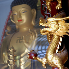 Dragon & Buddha (NowJustNic) Tags: china temple 50mm gold nikon dragon buddha swastika beijing buddhism pearl tanzhetemple tanzhesi d80
