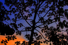 Silhouetted Tree in Colorful Sunset (kentsmith9) Tags: blue sunset sky orange costa color nature colors silhouette backlight clouds canon botanical eos costarica colorful rica hdr backlighting 40d flickrduel canon40d hdraward notmaxgroup 4treeporn