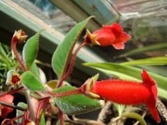 cashmere flower