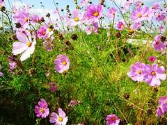 meadow (stimbarn) Tags: shan bai cheung